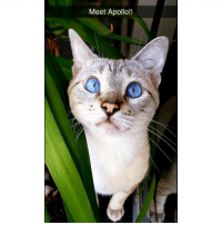 Memes, Apollo, and 🤖: Meet Apollo!! Cat snaps!!