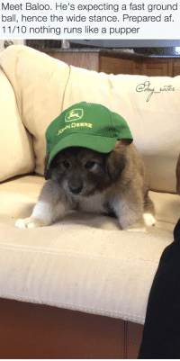 """Af, Animals, and Target: Meet Baloo. He's expecting a fast ground  ball, hence the wide stance. Prepared af  11/10 nothing runs like a pupper   DEERE <p><a href=""""http://animalrates.tumblr.com/post/146480964520/more-animals-rated-here"""" class=""""tumblr_blog"""" target=""""_blank"""">animalrates</a>:</p>  <blockquote><p><a href=""""http://animalrates.tumblr.com/"""" target=""""_blank"""">more <b>animals rated</b> here</a></p></blockquote>"""