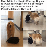 "80s, Bless Up, and Clock: Meet Eddie, the Hospital Therapy Dog who  is always carrying around his bookbag of  toys and can always be found in the  Pediatric Intensive Care Unit  @DrSmashlove  Reddit u/Stuffy Unicorn Part 2 (see previous post for Part 1): He'd leap out of his truck wearing overalls and construction boots and a trucker cap - not Ed Hardy but a real one, an unironic one lol. And he look like Tom Brady in the face but he burly like Tom Hardy. And he got no shirt under the overalls just manly. And my girl like ""Aren't you cold?"" And in a syrupy southern drawl he say ""mayam - I werked one year as longshoreman in Alasker. One tam - my toes done froze off, lost two. But I survaved. An I don't git cold no mowar. 🤠"" He reach under the steering wheel, pop the hood, walk around, flicks it open, props it up with only his arm, grab wiper fluid out of the bed of his truck which also houses a deer he just shot, opens it with his mouth, pours the fluid, replaces the cap. I'm in awe. My girl even more in awe. He grab a blanket out of his truck and wrap up my girl and he like ""just makin sure yer old lady's warm, sir 😌. Would yall lak to come to my home for some deer steaks before continuing yer journey?"" And I'm like ""wow what a gracious offer u know what MSNBC and CNN are wrong about y'all, rednecks are amazing people"" and just then. Right then. My girl hop out the whip. I'm like ""WOMAN! IT'S SNOWING?"" And she like ""you don't want steak then suit yourself I'M HUNGRY. We could have stopped at Ponderosa like I asked but you said we almost home WELL SMASH WE AIN'T."" And with that she retreat to the redneck's truck. ""But baby,"" I said. ""We got a nice home. Like the republican Family in Strangers things 😥."" ""That might be true"" she say ""but money can't buy happiness."" And just like that they ride off in the sunset. People always say ""I was born in the wrong era."" BIH! NOT ME! In the 80s u could lose ya girl over wiper fluid! I'm not handy but I know how a Neapolitan suit should fit in the shoulder and how to tastefully appoint a living room with Eames chairs and Mies van der Rohe bench but still make it vibe with heirloom pieces like a grandfather clock! Bish I'm aesthetic asf! I was raised with sisters! And it's ladies who, combined with my wondrous tung and pipe game, and my brand of earnest empathy, accept my type of manliness lol! Thank you God!! Bless up! 😂😂😂"