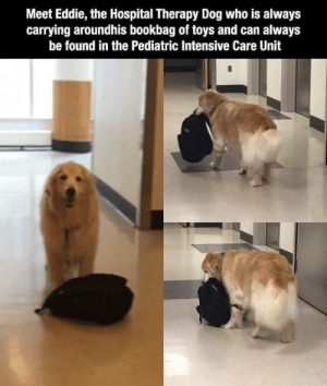 Have some faith in humanity, people!#animals #wholesomeanimals #wholesomememes #cuteanimals #heartbreaking #animalstories: Meet Eddie, the Hospital Therapy Dog who is always  carrying aroundhis bookbag of toys and can always  be found in the Pediatric Intensive Care Unit Have some faith in humanity, people!#animals #wholesomeanimals #wholesomememes #cuteanimals #heartbreaking #animalstories