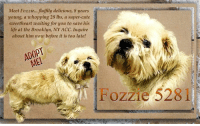 Animals, Cute, and Desperate: Meet Fozzie... fluffily delicious, 8 years  young, a whopping 28 Ibs, a super-cute  sweetheart waiting for you to save his  life at the Brooklyn, NY ACC. Inquire  about him now before it is too late!  pl  ADOPT  ME!  Fozzie 52811 **FOSTER or ADOPTER NEEDED ASAP**  Meet Fozzie... fluffily delicious, 8 years young, a whopping 28 lbs, a super-cute sweetheart waiting for you to save his life at the Brooklyn, NY ACC. Inquire about him now before it is too late!  ✔Pledge✔Tag✔Share✔FOSTER✔ADOPT✔Save a life!  Fozzie 52811 Small Mixed Breed Sex male Age 8 yrs (approx.) - 28 lbs My health has been checked.  My vaccinations are up to date. My worming is up to date.  I have been micro-chipped.  I am waiting for you at the Brooklyn, NY ACC. Please, Please, Please, save me!  ****************************************** To FOSTER or ADOPT,  SPEAK UP NOW & Save a Life:  Direct Adopt from the ACC Or Apply with rescues Or Message Must Love Dogs - Saving NYC Dogs for assistance ASAP!!! ******************************************  The general rule is to foster you have to be within 4 hours of the NYC ACC approved New Hope partner rescues you are applying with and to adopt you will have to be in the general NE US area; NY, NJ, CT, PA, DC, MD, DE, NH, RI, MA, VT & ME (some rescues will transport to VA) UNLESS you can get to the shelter IN PERSON.  ****************************************** ... NOTE: *** WE HAVE NO OTHER INFORMATION THAN WHAT IS LISTED WITH THIS FLYER *** - For more information or to adopt, please EMAIL adopt@nycacc.org  - SUBJECT Line: ** Dogs Name & ID# **  - Don't forget to add your email address and phone numbers where they can reach you to your email as well. .... RE: ACC site Just because a dog is not on the ACC site does not mean they are safe by any means. There are many reasons for this like a hold or an eval has not been conducted yet or the dog is rescue-only... the list goes on... Please, do share & apply to foster/adopt these pups a