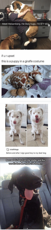 """Giraffe, Good, and Home: Meet Heisenberg. He likes hugs. I'm 6'1"""" bt   if u r upset  this is a puppy in a giraffe costume   viralthings  Before and after I sign good boy to my deaf dog   Rescued this boy from the shelter and this  was hisface thewholeride home... These made my day"""