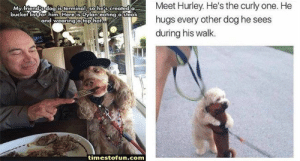 t's the beginning of a new week and we're here with a new collection of feel good memes! So have some faith in humanity, people....#wholesome # wholesome memes # animal memes # funny memes # feel good memes #faith in humanity: Meet Hurley. He's the curly one. He  hugs every other dog he sees  during his walk.  МУ.friendRdogl isterminal, sohe:s.created  Here is  bucket listifor him, Dylaneating a steak  and wearingatop hat  timestofun.com t's the beginning of a new week and we're here with a new collection of feel good memes! So have some faith in humanity, people....#wholesome # wholesome memes # animal memes # funny memes # feel good memes #faith in humanity