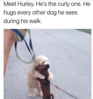 Animals, Dogs, and Memes: Meet Hurley. He's the curly one. He  hugs every other dog he sees  during his walk Dog Memes Of The Day 32 Pics – Ep44 #dogs #dogmemes #lovelyanimalsworld - Lovely Animals World