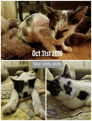 Meet Jack! Found on Halloween Abandoned in a Parking Lot - Freezing and Starving. He's Grown Into Such a Loveable and Playful Kitty.: Meet Jack! Found on Halloween Abandoned in a Parking Lot - Freezing and Starving. He's Grown Into Such a Loveable and Playful Kitty.