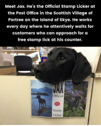 "Post Office, Reddit, and Target: Meet Jax. He's the Official Stamp Licker at  the Post Office in the Scottish Village of  Portree on the Island of Skye. He works  every day where he attentively waits for  customers who can approach for o  free stamp lick at his counter.  Official  Stamp  Licker <p><a href=""http://humoristics.tumblr.com/post/173984574363"" class=""tumblr_blog"" target=""_blank"">humoristics</a>:</p> <blockquote>Mleming for a living <p><a href=""https://www.reddit.com/r/dogswithjobs/comments/8ig2n6/mleming_for_a_living/?utm_source=ifttt"" target=""_blank"">credit</a></p> </blockquote>"