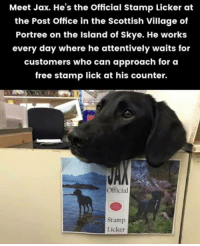 Meet Max the stamp licker.: Meet Jax. He's the Official Stamp Licker at  the Post Office in the Scottish Village of  Portree on the Island of Skye. He works  every day where he attentively waits for  customers who can approach for oa  free stamp lick at his counter.  Official  Stamp  Licker Meet Max the stamp licker.
