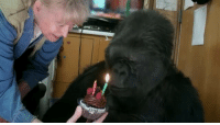 Memes, Western, and bbc.com: Meet Koko, a western lowland gorilla who has been taught sign language. She's making us question what we think we know about animal intelligence. Join in the conversation on social media with TalkingGorilla. The full documentary airs on BBC One Wednesday 15th June and will be available on BBC iPlayer for 30 days afterwards. For those in the US, it's broadcast on PBS on the 3rd August. Subscribe to BBC Earth: http:-www.youtube.com-subscription_c... BBC Earth YouTube Channel: http:-www.youtube.com-BBCEarth BBC Earth Facebook http:-www.facebook.com-bbcearth (ex-UK only) BBC Earth Twitter http:-www.twitter.com-bbcearth Visit http:-www.bbc.com-earth-world for all the latest animal news and wildlife videos This is a channel from BBC Worldwide who help fund new BBC programmes. 1-3