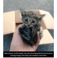 Being Alone, Funny, and Hungry: Meet Komari. At five weeks, she was found abandoned and all alone.  Looking hungry and sickly, she needed a new home. Heart warming story ❤️