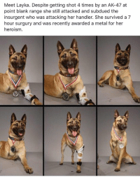 Memes, Badass, and Ak-47: Meet Layka. Despite getting shot 4 times by an AK-47 at  point blank range she still attacked and subdued the  insurgent who was attacking her handler. She survived a 7  hour surgury and was recently awarded a metal for her  heroism Layka is a Badass! https://t.co/cai03bkkoz