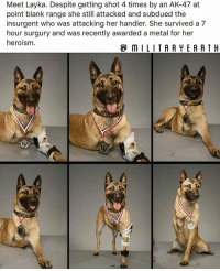 Memes, Ak-47, and Metal: Meet Layka. Despite getting shot 4 times by an AK-47 at  point blank range she still attacked and subdued the  insurgent who was attacking her handler. She survived a 7  hour surgury and was recently awarded a metal for her  heroism.  P mILITARYEARTH Everyone I would like you to meet K9 Layka. https://t.co/qkjYgdEpy9