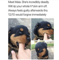 Memes, 🤖, and Arm: Meet Maia. She's incredibly deadly  Will rip your whole h*ckin arm off  Always feels guilty afterwards tho  12/10 would forgive immediately A bunch more cuteness! | @cuteandfuzzybunch