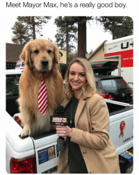Since America elected a Cheeto, does this mean America can also elect a Puppo? If so, let me know where to cut my check LMAOOOOOOOiAmGonnaLoseFollowersAgainWhyDoIDoDisToMyselfOOOOOOOOO 🇺🇸😍😂😂: Meet Mayor Max, he's a really good boy  RIGHT EQ  FICE  KESO.cOm Since America elected a Cheeto, does this mean America can also elect a Puppo? If so, let me know where to cut my check LMAOOOOOOOiAmGonnaLoseFollowersAgainWhyDoIDoDisToMyselfOOOOOOOOO 🇺🇸😍😂😂
