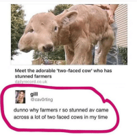 "Two-Face, Girl Memes, and Cow: Meet the adorable ""two-faced cow' who has  stunned farmers  dailyrecord.co.uk  gill  @cavorting  dunno why farmers r so stunned av came  across a lot of two faced cows in my time 🙃🙃"