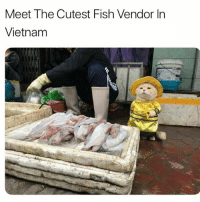 Love, Memes, and Fish: Meet The Cutest Fish Vendor In  Vietnam Follow @sobasicicanteven I love her page ❤️