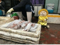 Internet, Fish, and Vietnam: Meet The Cutest Fish Vendor In Vietnam Who Is Taking The Internet By Storm With His Adorable Pics 😻😍😂