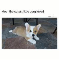 "Adam and Eve, Anaconda, and Ass: Meet the cutest little corgi ever!  @Dr Smashlove There are many things a lady can say to make a man feel special. (1) ""I love you"" <- tried and true. This has existed since Adam and Eve was wearing leaves to cover their genitalia Bruh. Simple and standard, and full of feeling. (2) ""I want a mold of your PP that I can carry around with me in my purse 😍"" <- this one always make me feel special. A customized dildo built to smash specifications? That's romance 😍. (3) ""Choke me daddy 🙂"" <- can't lose. This one always lights a fire, u feel me? 😀 But there is one thing a lady can say that is always music to a man's ears and has a 100% hit rate... (4) ""You don't have to wear a rubber any more, if you don't want to - we've been at for a while so I went ahead and got on the pill."" THIS IS TRUE LOVE FAM - IDGAF 😂. I hear this, and my heart brims with appreciation and adoration. It's a statement of understanding. ""I know u been walking thru this bomb ass forest with a Patagonia lookin ass raincoat, rubber overalls, Sorel boots, and one of them bucket hats that grandpas wear when they go fly fishing. But now I'm gonna let you frolic with reckless abandon inside this forest Bucky ass nekky, so u can feel the Flora and Fauna gently kiss your skin."" You feel me? This is like unlocking a hidden level in a video game. This is like tasting the seared scallops that ain't even on the menu but the chef brought them out because the old white men u brung to dinner just ordered $783 worth of alcohol so the chef is just like ""wow lemme hit him off with some scallops - he earned it - alcoholic lookin ass guests lmao"" <- weekly struggle 😫😂. This is like an invitation to the back room of a quaint French restaurant where u discover they got a speakeasy there that only rich trust fund boys with face tattoos who wear SLP denim and Yeezys and their model girlfriends know about but now u part of the mix too. U feel me? Anointed territory 😍. Anyway to all u ladies who gon fuck around and start taking birth control so we can gallivant freely in your gushing geyser of glory, y'all the realest MF MVP's on earth - BLESS UP 😍😂😂😂"