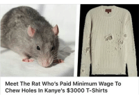 rat: Meet The Rat Who's Paid Minimum Wage To  Chew Holes in Kanye's $3000 T-Shirts