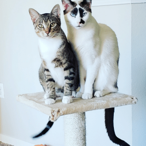 Meet the reasons we can't have nice things. Reddit, I present Ash and Bishop.: Meet the reasons we can't have nice things. Reddit, I present Ash and Bishop.