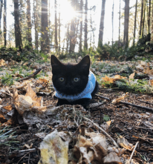 Meet Tiny. When we first found her she was underfed with a swollen tummy. Now she's a playful little terror.: Meet Tiny. When we first found her she was underfed with a swollen tummy. Now she's a playful little terror.