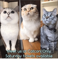 Hello my friends, we're sold out of Sunday meet and greet tickets. Now we only have Saturday 8-12 tickets available. 100% of net proceeds benefit animals in need ❤️ bit.ly-NalacatCatcon: Meet us at Catcon! Only  Saturday tickets available Hello my friends, we're sold out of Sunday meet and greet tickets. Now we only have Saturday 8-12 tickets available. 100% of net proceeds benefit animals in need ❤️ bit.ly-NalacatCatcon