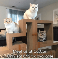 Anaconda, Animals, and Memes: Meet us at CotCon  Only sat 8/12 tix available Come pet me, take photos with me and kiss me at Catcon. Only Saturday 8/12 meet and greet tickets available. 100% of net proceeds benefit animals in need. www.nalacat.com