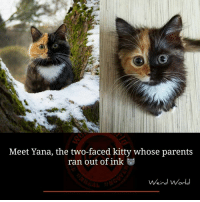 Kitties, Memes, and Two-Face: Meet Yana, the two-faced kitty whose parents  ran out of ink  Weird World