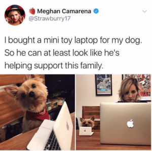 Freeloading dogs not paying no rent.Tw: strawburry17: Meghan Camarena  @Strawburry17  I bought a mini toy laptop for my dog  So he can at least look like he's  helping support this family Freeloading dogs not paying no rent.Tw: strawburry17