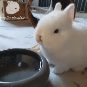Dehydration is not a joke. Remind your friend to drink water.  By Mellow The Rabbit: mellowtherabbit Dehydration is not a joke. Remind your friend to drink water.  By Mellow The Rabbit