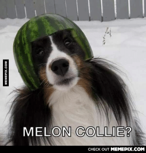 Whenever my friend is sad, I send him this to cheer him upomg-humor.tumblr.com: MELON COLLIE?  CHECK OUT MEMEPIX.COM  MEMEPIX.COM Whenever my friend is sad, I send him this to cheer him upomg-humor.tumblr.com