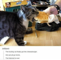 good cat: meloown  The fucking cat finally got the cheeseburger.  We can all go home.  The internet is over. good cat