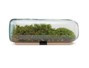 meme-mage:  found-on-amazon:  Moss Terrarium  Discover the best products on Amazon. We feature beautiful and functional products, you can actually buy.We bring boutique curation to the Internet's largest catalog. http://found-on-amazon.com/ : meme-mage:  found-on-amazon:  Moss Terrarium  Discover the best products on Amazon. We feature beautiful and functional products, you can actually buy.We bring boutique curation to the Internet's largest catalog. http://found-on-amazon.com/