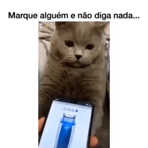 Memes | Engraçado | Funny | Humor | Zuerira | Comédia | Piadas | Gatos | Cat | Gato | Cats | Animal | Pet: Memes | Engraçado | Funny | Humor | Zuerira | Comédia | Piadas | Gatos | Cat | Gato | Cats | Animal | Pet
