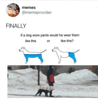 Oh my god it happened. @drsmashlove figured out the dog pants mystery. Twitter memeprovider: memes  @memeprovider  FINALLY  If a dog wore pants would he wear them  like this  or  like this? Oh my god it happened. @drsmashlove figured out the dog pants mystery. Twitter memeprovider