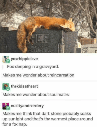Bucked: MEMORY  NGELINE BUCK  yourhippielove  Fox sleeping in a graveyard.  Makes me wonder about reincarnation  the kidsatheart  Makes me wonder about soulmates  nudity and nerdery  Makes me think that dark stone probably soaks  up sunlight and that's the warmest place around  for a fox nap.