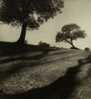 Tumblr, Australia, and Blog: memoryslandscape: Max Dupain, Bawley Point Landscape, 1938 Gelatin silver photograph, 29 x 26.6 cm National Gallery of Australia, Canberra, Purchased 1982