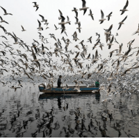 """Memes, Capital, and India: Men feed seagulls along the Yamuna river on a smoggy morning in New Delhi. Pollution levels reached 30 times the World Health Organization's safe limits in some parts of India's capital last week, forcing the authorities to bring in emergency measures to combat the problem. They've now been lifted after air quality improved from """"severe"""" to """"very poor"""". (Photo credit: Reuters) delhi smog pollution india air"""