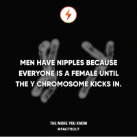 """Memes, The More You Know, and Brain: MEN HAVE NIPPLES BECAUSE  EVERYONE IS A FEMALE UNTIL  THE Y CHROMOSOME KICKS IN.  THE MORE YOU KNOW  @FACT BOLT """"For the first several weeks a developing embryo follows a """"female blueprint,"""" from reproductive organs to nipples. Only after about 60 days does the hormone testosterone kick in (for those of us with a Y chromosome), changing the genetic activity of cells in the genitals and brain."""" — Source: http:-www.livescience.com-32467-why-do-men-have-nipples.html"""