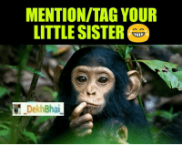 Monkey, Dekh Bhai, and International: MENTION/TAG YOUR  LITTLE SISTER  Dekh Bhai For every brother his sister is no less then monkey & vice versa 😂😂 Sibling Stories @ommy_007