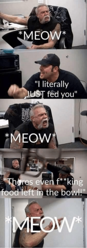 """Food, Bowl, and Eve: MEOW*  """"I literally  UST fed you""""  MEOW  res eve  * k  food left in the bowl"""" This."""