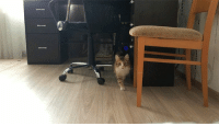 Camera, Reds, and Irl: Meow_IRL (x-post /catgifs)