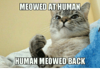 <p>Cat People Will Understand.</p>: MEOWED AT HUMAN  HUMAN MEOWED BACK <p>Cat People Will Understand.</p>