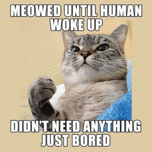 Bored, Memes, and 🤖: MEOWED UNTIL HUMAN  DIDNT NEED ANYTHING  JUST BORED