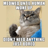 Bored, Memes, and 🤖: MEOWED UNTIL HUMAN  WOKE  UP  DID NT NEED ANYTHING  JUST BORED