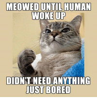 Bored, Memes, and 🤖: MEOWED UNTIL HUMAN  WOKE UP  DIDNT NEED ANYTHING-  JUST BORED
