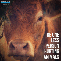Animals, Memes, and Kindness: MERCY FOR  ANIM ALS  BE ONE  LESS  PERSON  HURTING  ANIMALS 💗💗💗 govegan vegansofig mercyforanimals loveanimals kindness animallovers cowsofinstagram