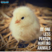 Animals, Memes, and Kindness: MERCY FOR  ANIM ALS  BE ONE  LESS  PERSON  HURTING  ANIMALS Please leave animals off your plate. 💗 govegan vegansofig mercyforanimals loveanimals babyanimals kindness animallovers