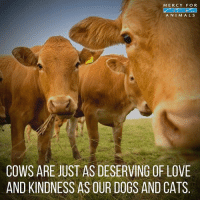 Animals, Cats, and Dogs: MERCY FOR  ANIMALS  COWS ARE JUST AS DESERVING OF LOVE  AND KINDNESS AS OUR DOGS AND CATS Truth!! 💕 govegan vegansofig mercyforanimals loveanimals truth fact loveanimals lovemydog kindness