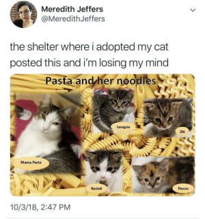 hotellesbian: mama pasta looks so kind: Meredith Jeffers  @MeredithJeffers  the shelter where i adopted my cat  posted this and i'm losing my mind  Pasta and/her noodles  Lasagna  Ziti  Mama Pasta  Ravioli  Penne  10/3/18, 2:47 PM hotellesbian: mama pasta looks so kind