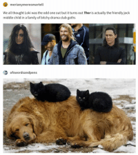 Club, Family, and Funny: merianymerosmartell  We all thought Loki was the odd one out but it turns out Thor is actually the friendly jock  middle child in a family of bitchy drama club goths  ofswordsandpens 24 Funny Animal Pictures To Distract You From Whatever You're Supposed To Be Doing